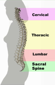 Spinal-Cord-Streches-For-Better-Health